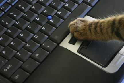 Ремонт ноутбуков и компьютеров в Брянске
